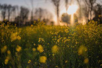 Blumen Teil 110 von Tania Perneel