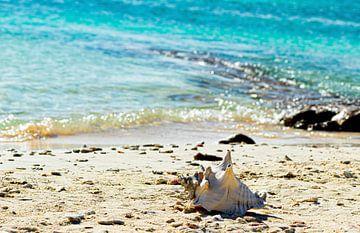Zee met schelp bonaire van Daphne Brouwer
