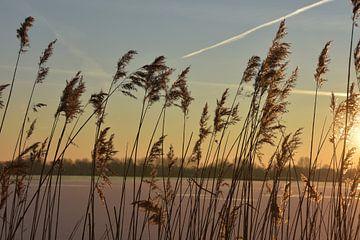 Winter in Reeuwijk von Michelle Boot