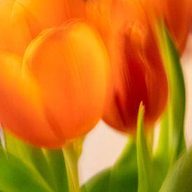 Tulpen | close van Rob van der Pijll
