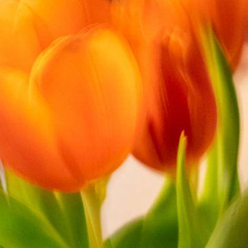 Tulpen | schließen von Rob van der Pijll
