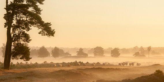 Wandeling van Piet Haaksma