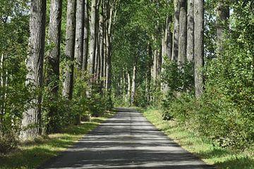 De bomenweg van Henk de Boer