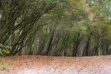 rangée d'arbres inclinés sur Tania Perneel