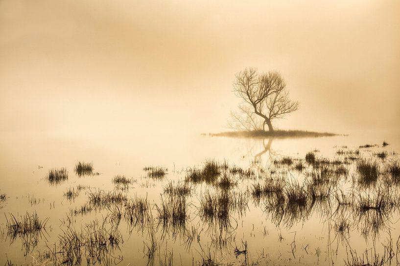Torfmoor bei Morgennebel von Frans Lemmens