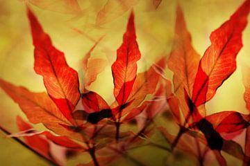 Rood herfstblad van Kees-Jan Pieper