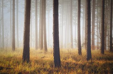 Natuurlijk eenvoud van Joris Pannemans - Loris Photography