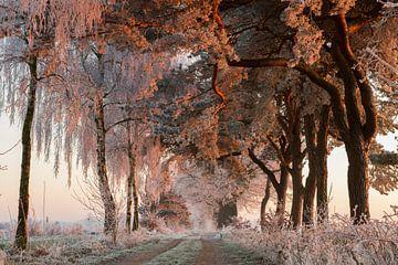 Winterwunderland von Paul Wendels