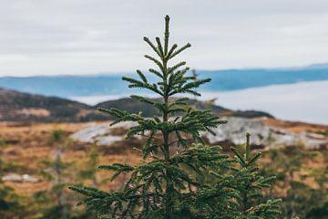 Weihnachtsbaum in norwegischer Landschaft von Jessie Jansen