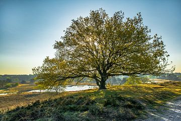 Imposante boom in het Quin van Marian Schepens