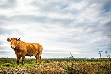 Koe van Johan Vet