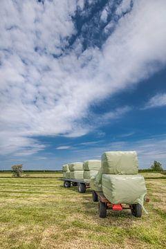 De eerste oogst in het voorjaar in Gaasterland, Friesland. van