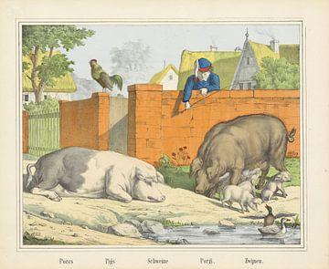 Zwijnen, Firma Joseph Scholz, 1829 - 1880