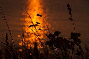 Zonsondergang op het Markermeer van Laura Weijzig