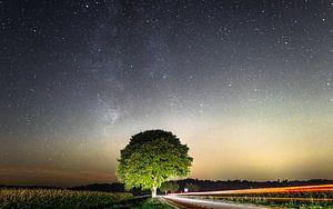 Markante boom bij nacht van Erik Keuker