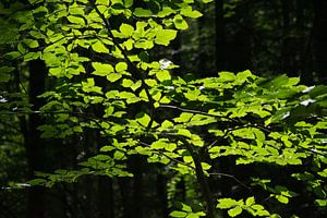 Verlichte bladeren in donker bos van