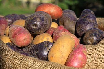 Verschieden Kartoffelsorten von Karina Baumgart