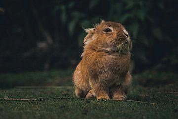 Bunnies sur Lars Hoppe