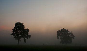 Bomen in mist van Ivo Heus