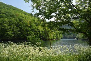Bloemen, een berg en meer van