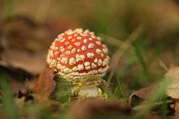 Herbst mit roter Mütze von Francois Ruiter Photography