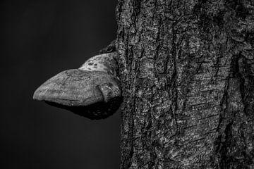 Tonderzwam  tegen boom van Natasja Bittner