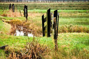Hekken in de Weerribben von Fleksheks Fotografie