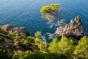 Uitzicht vanaf de rotsachtige kust naar bomen en struiken en de blauwe zee en rotsen van Hans-Heinrich Runge
