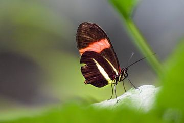 Close-up van een mooie kleurrijke vlinder van Kim de Been