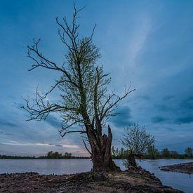 Eenzame krachtige boom aan het water van Michel Knikker
