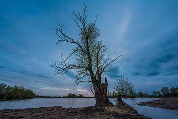 Arbre puissant et solitaire près de l'eau