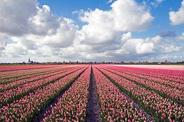 Landschaft mit rosa Tulpen von Maurice de vries