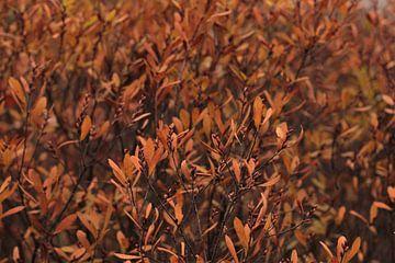 Natuurlijke schoonheid, Herfstkleuren van Laura Reedijk