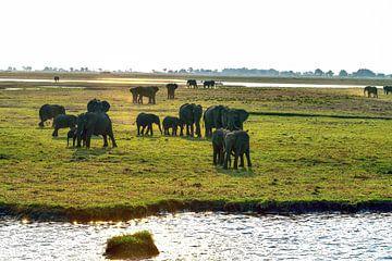 Familien-Elefant im Chobe-Nationalpark Botswana von Merijn Loch