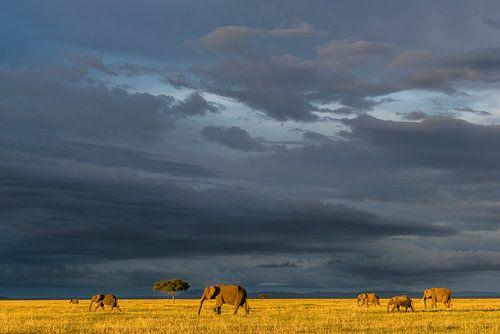 Olifanten op de savanne van jowan iven