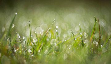 Tau auf dem Gras von Anita Kram