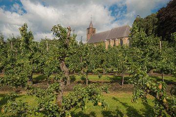 St. Jan de Doper kerk Echteld tussen de fruitbomen van Moetwil en van Dijk - Fotografie