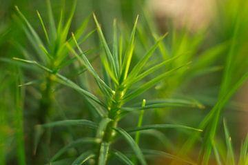Groene plant | macro van Jos van Ooij