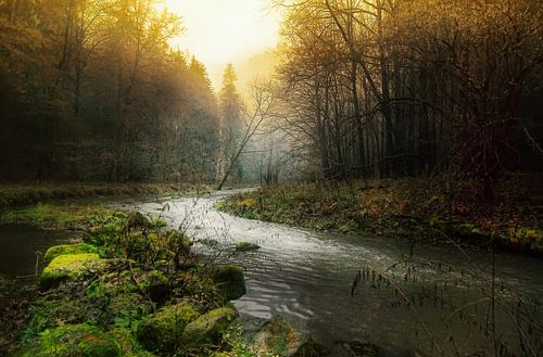Kronkelende rivier door mistige ochted van