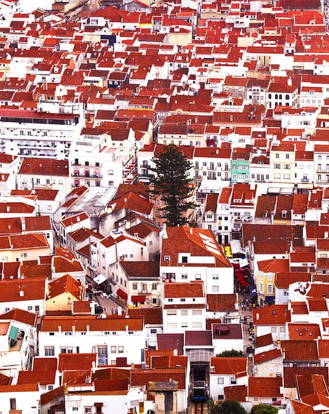 The lonely tree of Nazaré - Portugal van Ricardo Bouman | Fotografie
