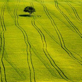 Solitair tree on a green field van Patrick LR Verbeeck