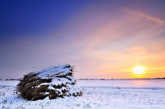 Winterlandschap met riet van Sjoerd van der Wal