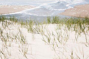Dünengebiet Texel von Paula van den Akker