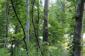 Boslandschap van Niels Hens