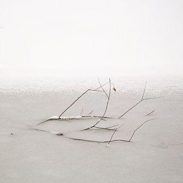 Frozen In Pond von Lena Weisbek