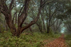 Mystiek in het bos