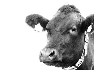 Kuh-Porträt von Patrick Herzberg