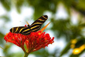 Vlinder op bloem van F Blouw