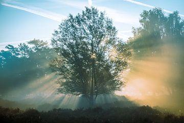 Gloeiende boom 2 van Jayzon Photo