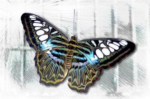 Vlinder op het raam, vrijheid?